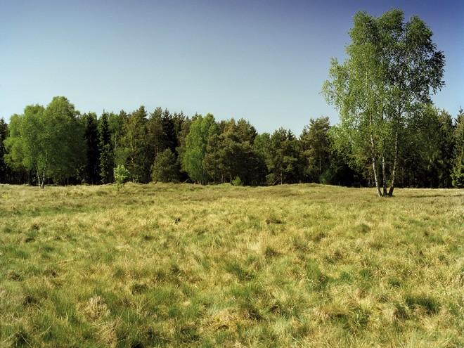 A lovely grassey field should be safe......
